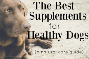 The Best Supplements for Dogs (A Natural Care Guide)